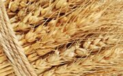nature_wheat-field-widescreen--03_23-2560x1600